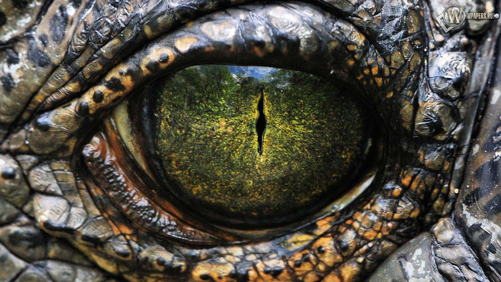 My Encounter with a Reptilian Psychopath